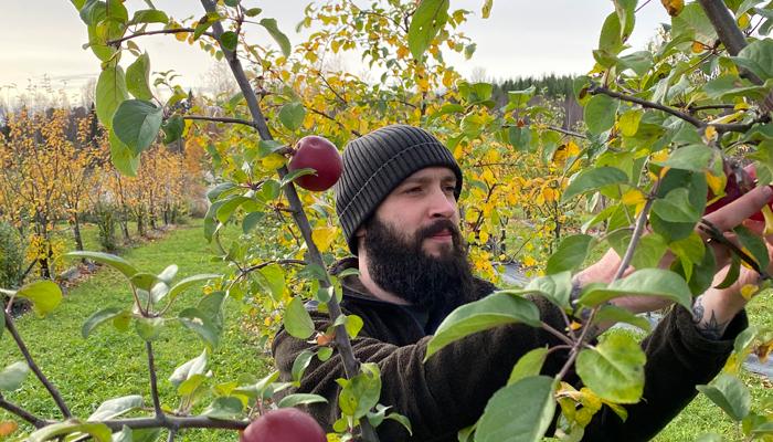 Scott plockar äpplen i Burträsk